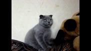 Сладко котенце се плези - :*
