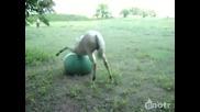 Конче си играе с топка