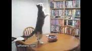 Много Луда Котка