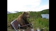 Какво правиш, когато мечка седне до теб? Вадиш камерата и я снимаш!