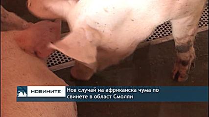 Нов случай на африканска чума по свинете в област Смолян