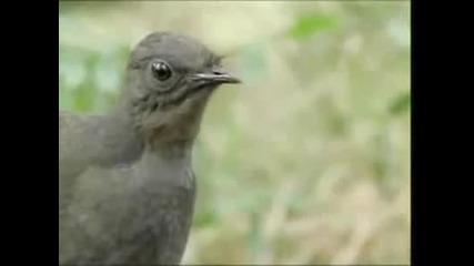 Невероятната птица Лира