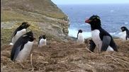 Пингвини хванати неподготвени с Penguincam