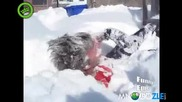 Хапни си малко сняг.. смях