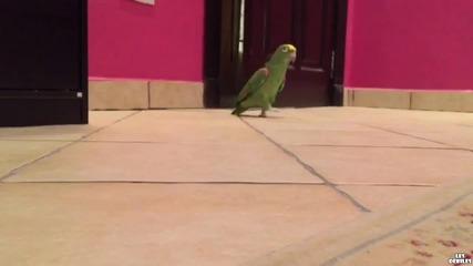 Папагал се смее като злодей от филм (смях)
