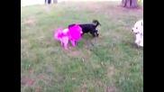 Аз Розово Куче Ли Съм Или Кво?