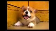 Сладко Бебе Кученце