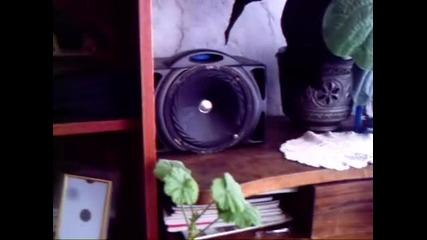 Kaчествен звук от Българска тонколона