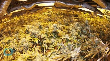 The Farm-to-table Marijuana Experience is Here
