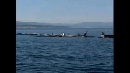 Симфония на китове