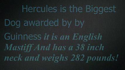 Най-големите неща