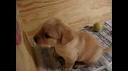 Най - Сладкото Кученце