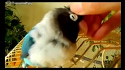 Ласки и помилване на нежно папагалче