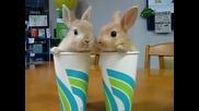 Сладки зайчета в чаши