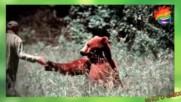 Пълна лудница - Когато животните се правят на хора, а хората в животни (МНОГО СМЯХ)