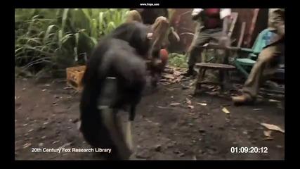 Не се доверявайте на шимпанзе с Ak-47 ! Смях