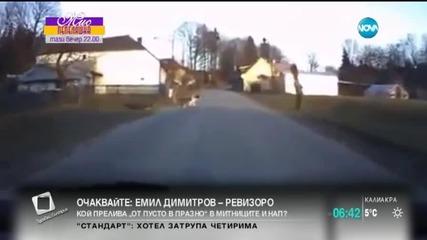 Куче разхожда дете