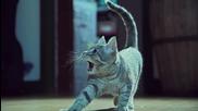 music video • Kittens On The Beat ( Savant - Wildstyle ) /dubstep/
