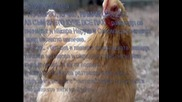 * fic * Птичи грип [ H5n1 ] - 4-ти еп.