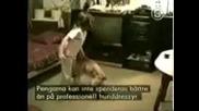Познай Какво Ти Готви Кучето