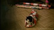 Как да опаковаме котка като коледен подарък