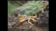 Плъх се бие сас Скорпион !!!