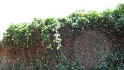 разчистване озеленяване поддържане тайни скрити в растения