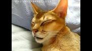 Коте спи и псува!
