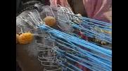 индийски ритуал мъже изтърпяват стотици пробождания с куки