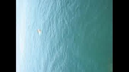 Скок В Водата