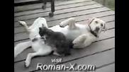 Котка масажира куче по топките :) ) )