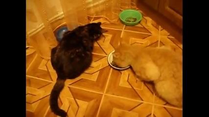 Най-нахалната котка:):)