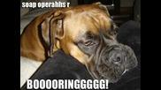 Смях! много смешни кучета