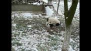 Бебета Бок На 2 Месеца В Снега