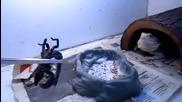 Брадат дракон яде скорпион