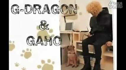 G- dragon and Gaho