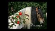 Relax - Armik - For - Annette