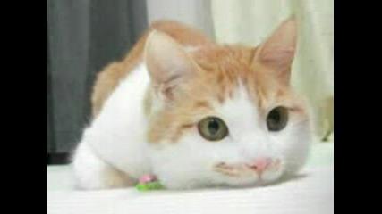 Сладки И Смешни Котенца Sweet Cat