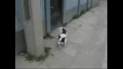 Най-смешните клипове с Животни