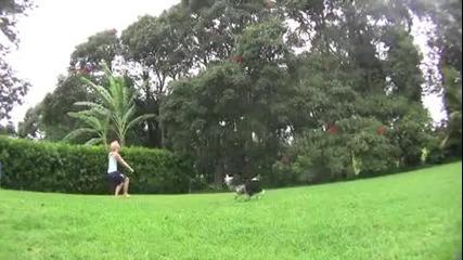 Изумително куче играе волейбол!