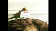 Реклама - DHL Коте и Папагал