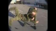 Демонстрация на Бойните умения на Вдв(въздушно Десантна Войска)