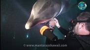 Делфин търси помощ от водолаз