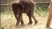 Бебе слонче