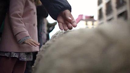 Sheep shepherded through Madrid for annual festival