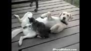 Котка масажира пишката на куче