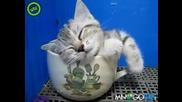 Коте спи в чаша