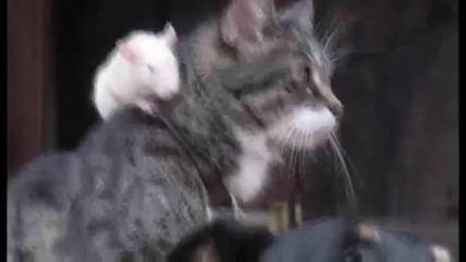 Вечна любов между куче котка и мишка