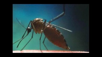 Максим - ще те хапят комари