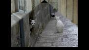 Бездомните Котки В България - Спасете Живот!